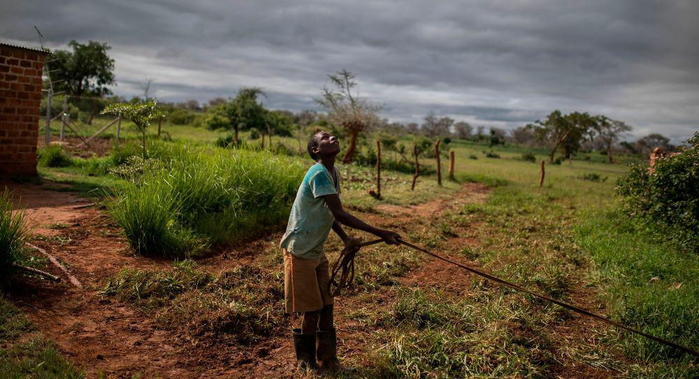 The EU's Deforestation Package: A Test for Taking the Green Deal Global