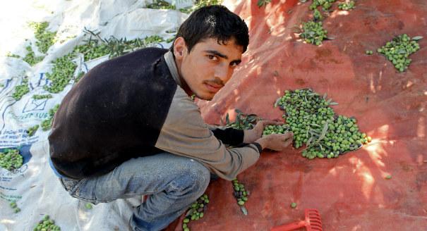 Reforming Jordan's Labor Market