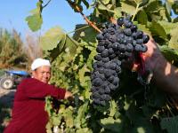 Food Security in the Arabian Peninsula